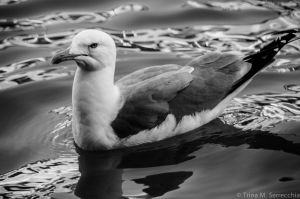 5D CHALLENGE Venice seagull BW_